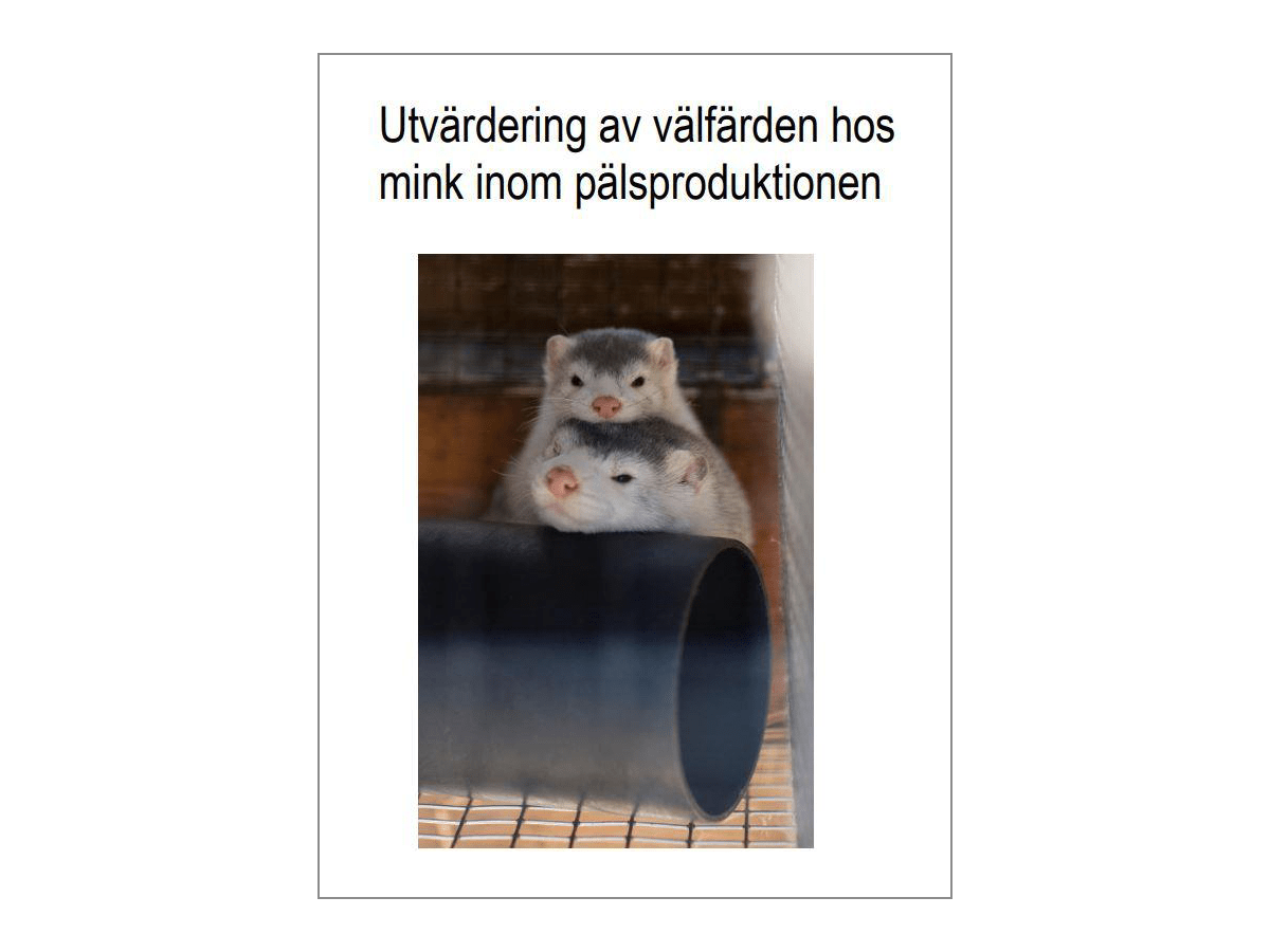 The Swedish Board of Agriculture's evaluation of mink welfare - English summary