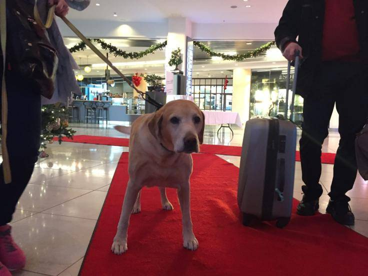 hund som checkar in på hotellet 2015